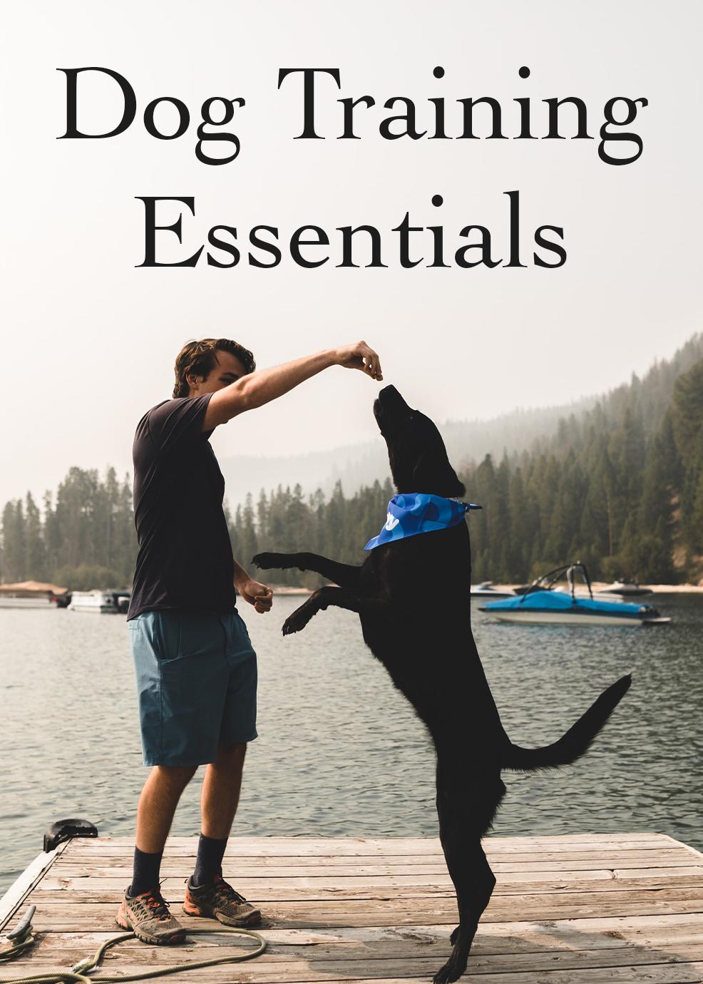 Dog Training Essentials